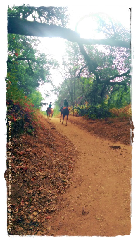 Why horse riding lessons? Girls riding on the trail on their own horses.